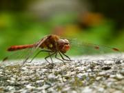 Insekten auf der Spur 1