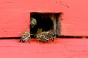 Das Imkereiprojekt: Fleißige Bienen