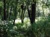 Der Wald ist voller Geheimnisse