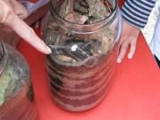 Abfallverwertung - Von wegen Abfall! Wir kompostieren! (Teil 1)